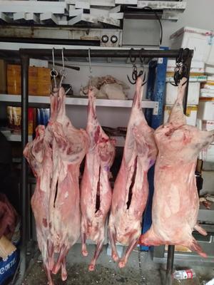 新疆维吾尔自治区乌鲁木齐市新市区草原大尾羔羊 30斤以下