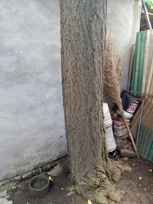 江苏省南京市鼓楼区白果树