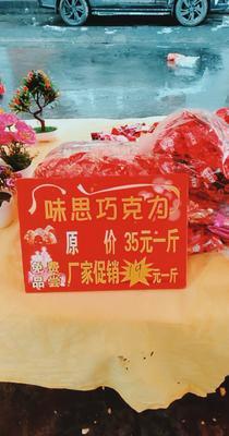 云南省曲靖市富源县巧克力 6-12个月