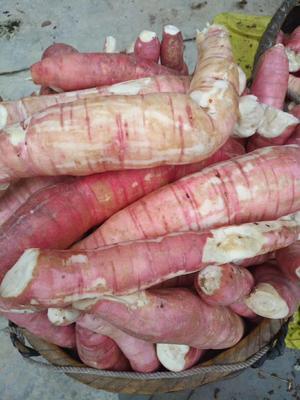 广东省梅州市梅县区农家种植木薯粉