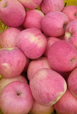 陕西省咸阳市礼泉县红富士苹果 75mm以下 条红 纸袋