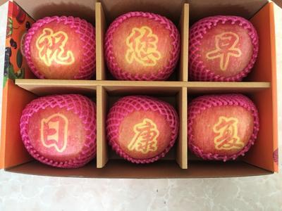 辽宁省大连市瓦房店市红富士苹果 90mm以上 条红 膜袋