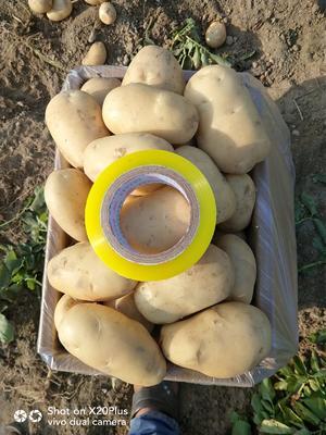 这是一张关于丽薯6号 3两以上 的产品图片