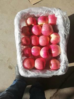 河北省石家庄市辛集市红富士苹果 75mm以上 表光 纸袋