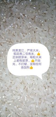 黑龙江省齐齐哈尔市泰来县稻花香2号稻谷 再生稻