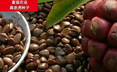 安徽省六安市霍山县黑老虎种子