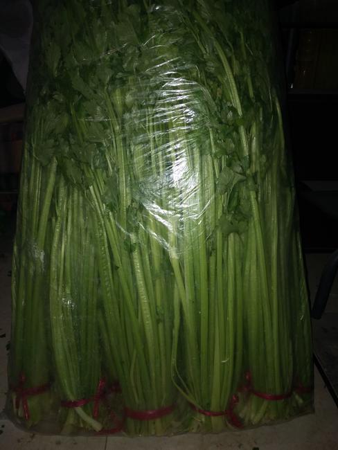毛芹 55~60cm 0.5斤以下 大棚种植