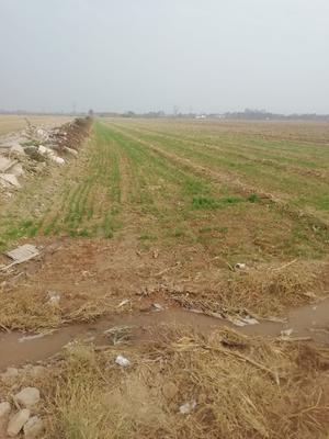 陕西省渭南市临渭区丰德存麦1号 存麦1和西农9718