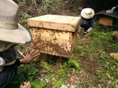 贵州省遵义市桐梓县土蜂蜜 塑料瓶装 2年以上 98%
