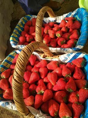 河北省秦皇岛市昌黎县红颜草莓 20克以上