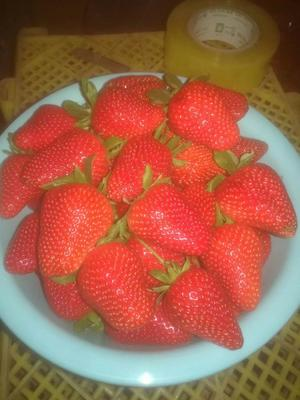 河北省邯郸市肥乡县章姬草莓 30克以上