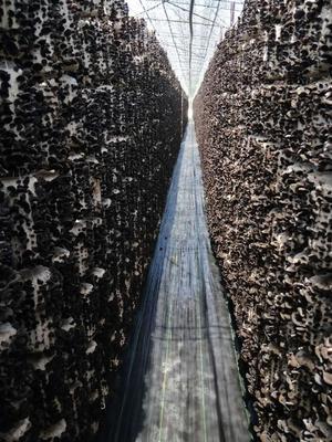 黑龙江省哈尔滨市道外区椭圆管骨架