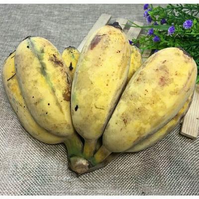 广东省茂名市电白区苹果蕉 八成熟