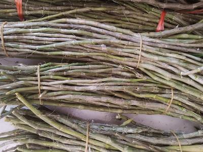 这是一张关于豆唇石斛 的产品图片