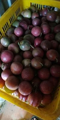 广西壮族自治区玉林市容县紫香一号百香果 80 - 90克