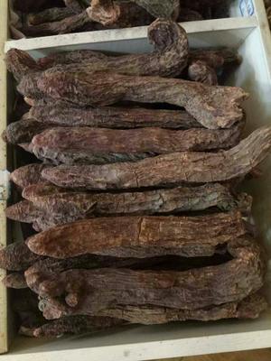 甘肃省酒泉市瓜州县(原安西县)锁阳 盒装 全根 干燥