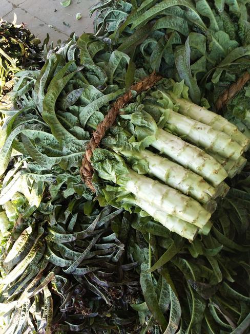 红尖叶莴苣 1.5~2.0斤 50-60cm