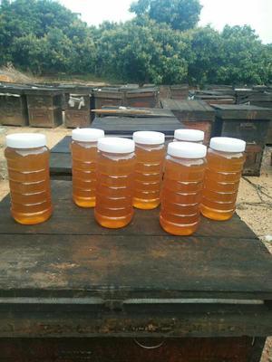 广东省广州市黄埔区土蜂蜜 塑料瓶装 2年 95%以上