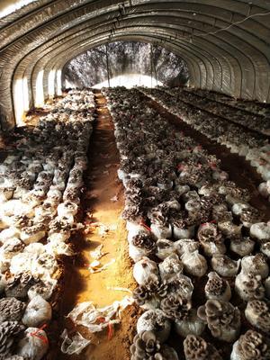 这是一张关于蘑菇 的产品图片