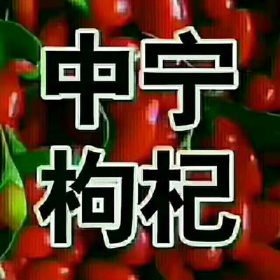 宁夏回族自治区银川市金凤区沙漠红枸杞 特优级