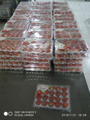 山东省济南市历城区甜宝草莓 20克以下