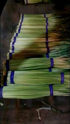 这是一张关于红帽蒜薹 50~60cm 的产品图片