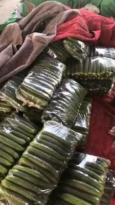 这是一张关于密刺黄瓜 25~35cm 的产品图片