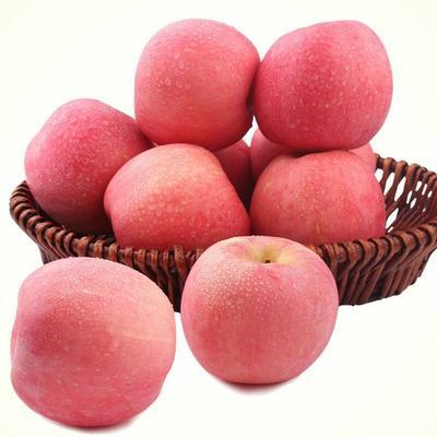 江苏省南京市雨花台区红富士苹果 65mm以上 统货 光果