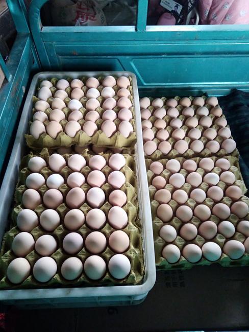土鸡蛋 食用 箱装