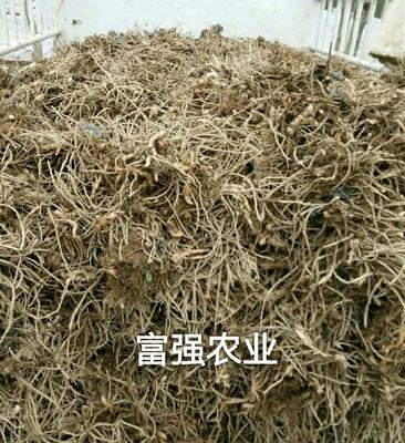 这是一张关于洋合笋种根 的产品图片