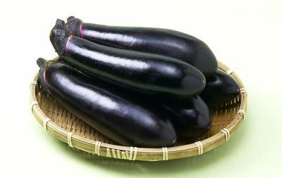 山东省潍坊市寿光市黑长茄 20~30cm 长茄