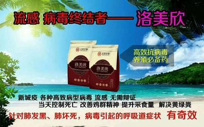 山东省潍坊市奎文区肉鸡 5-6斤 统货
