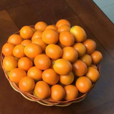 广西壮族自治区柳州市柳北区滑皮金桔 3-4cm 1-1.5两