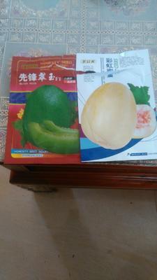 广东省汕尾市陆丰市绿宝甜瓜 0.5斤以上