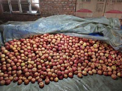 山东省烟台市莱阳市红富士苹果 80mm以上 统货 纸袋