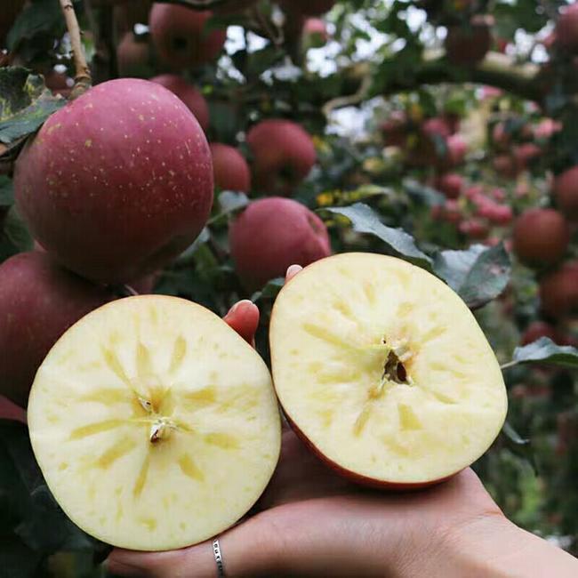 丑苹果 65mm以上 统货 光果  约10.0斤/箱