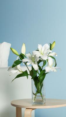 这是一张关于白玉兰 的产品图片