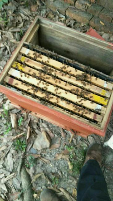 土蜂蜜 桶装 2年 90%以上