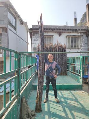 广西壮族自治区桂林市阳朔县黑皮甘蔗 2 - 3cm 2 - 2.5m