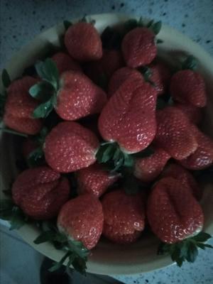 河北省保定市满城县宝桐草莓十九草莓 30克以上