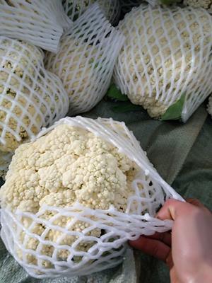 福建省南平市建瓯市白面青梗松花菜 松散 2~3斤