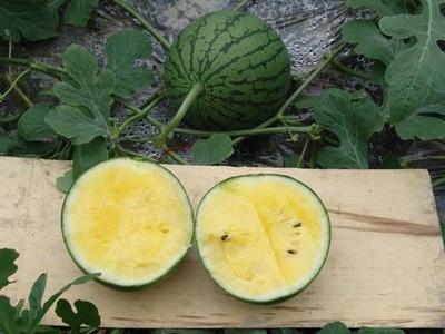 这是一张关于新金兰 3斤打底 9成熟 2茬 有籽 的产品图片
