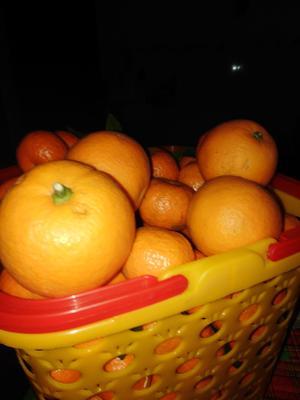 这是一张关于蜜香橙 65 - 70mm 4两以下 的产品图片