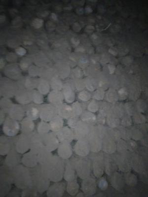 河北省邯郸市大名县白玉山药 50~70cm