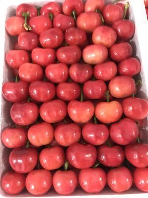 这是一张关于红灯樱桃 28-30mm 18-20g 的产品图片
