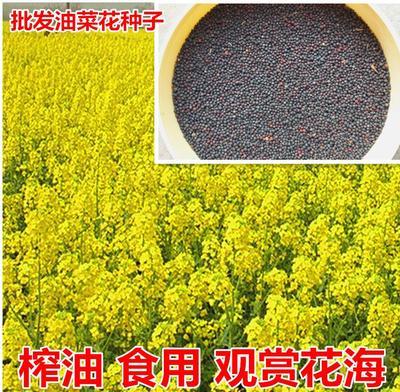 江苏省宿迁市沭阳县油菜籽种子 常规种 ≥97% ≥90% ≥98% ≤5%