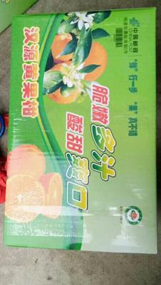 这是一张关于汉源晚熟黄果柑 统货 2 - 3两 的产品图片