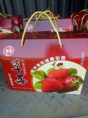 河北省保定市顺平县九九草莓 30克以上