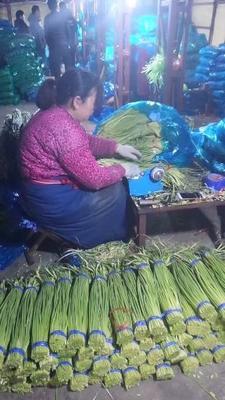 山东省济宁市金乡县金乡红帽蒜苔 70cm以上