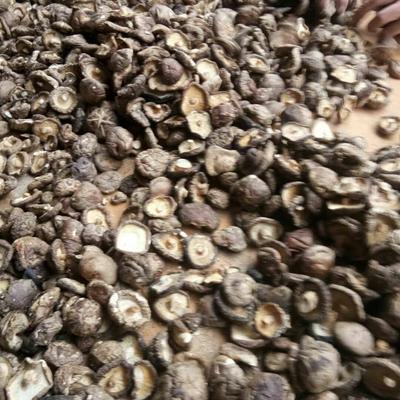 陕西省汉中市宁强县干香菇0912 袋装 1年以上